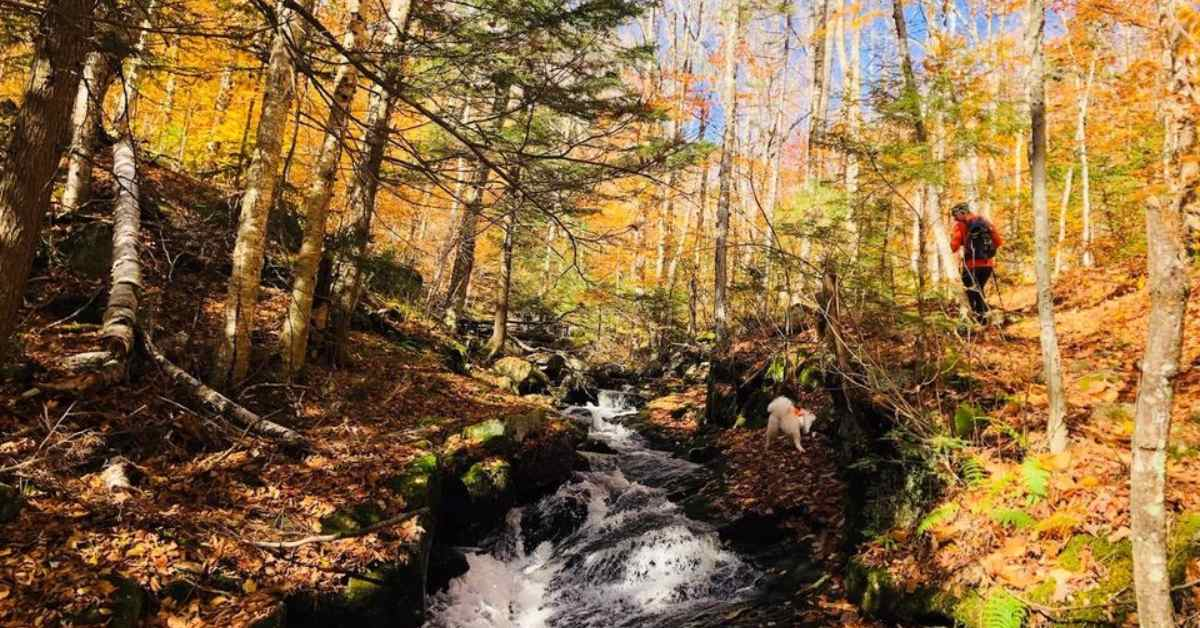 view of a river, trees with fall colors, and hiker in the distance