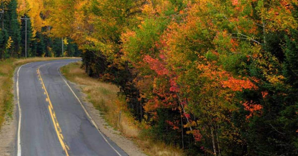 road with trees on the side with fall colors
